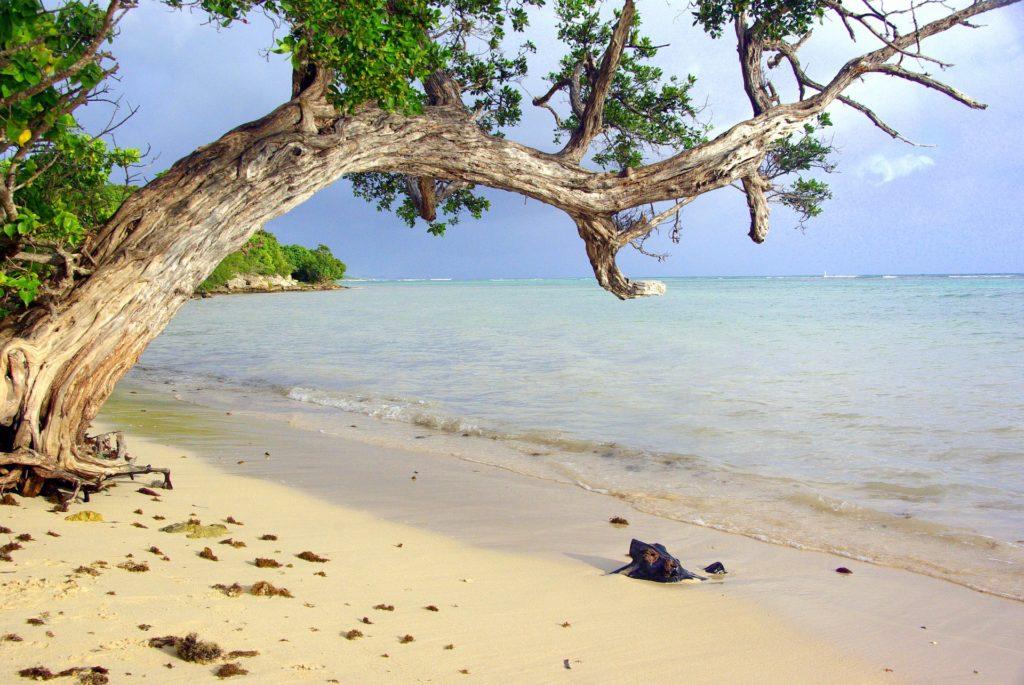CoffeeMeetsBeach - Best Beaches in Guadeloupe Le Bas du Fort